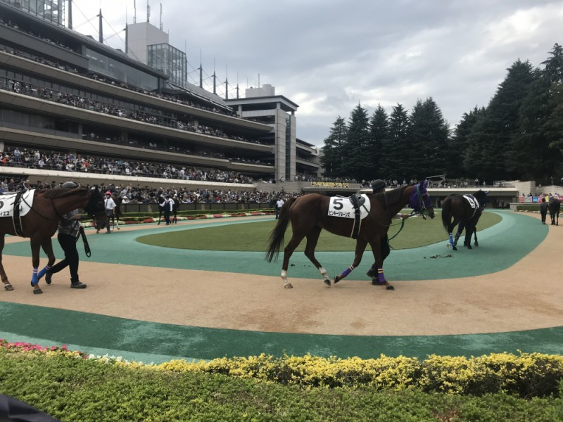 【14:30】「パドック」へ行き、レース前の馬の状態を確認する!