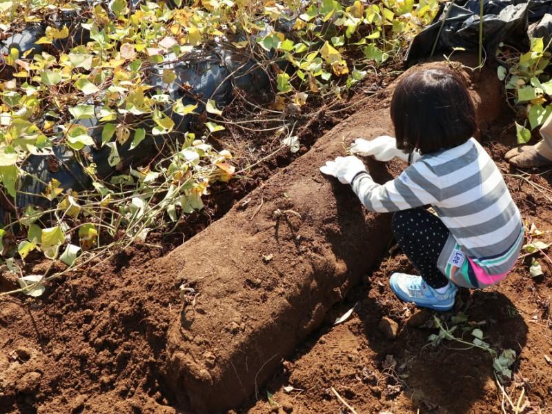 秋の味覚「さつまいも堀り」に挑戦!ゆったりとおしゃれランチ&公園遊びも楽しめる親子コース