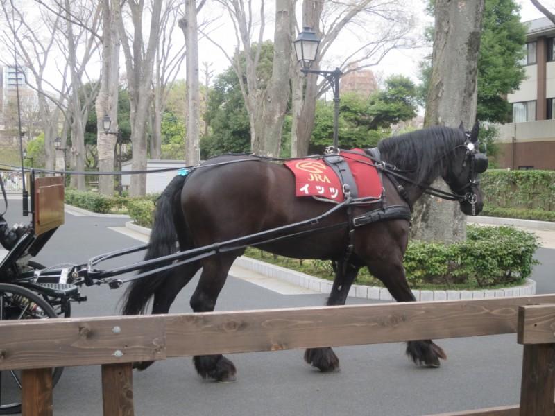 GWは東京競馬場のイベントへおでかけ!周辺のグルメスポットも楽しむ親子おでかけコース