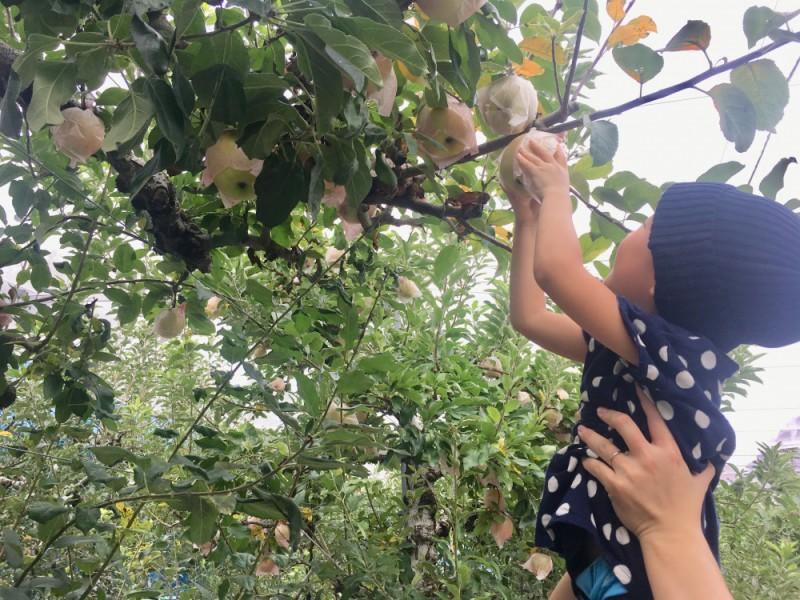 食欲の秋を満喫!りんご狩りと八幡山のグルメを楽しむ親子おでかけコース