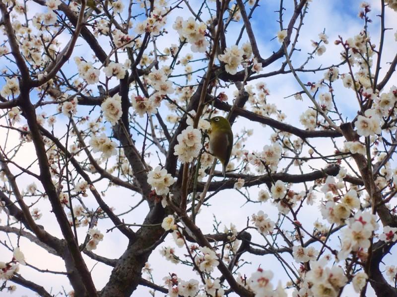 新代田駅周辺のウインドーショッピングと羽根木公園の「せたがや梅まつり」を楽しむおでかけコース