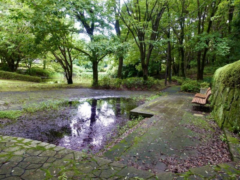 緑豊かなせせらぎがある「瓜生緑地」で涼を感じよう!多摩の公園散歩と人気パティスリー「ル・ジャルダン・ブルー」を楽しむ親子おでかけコース