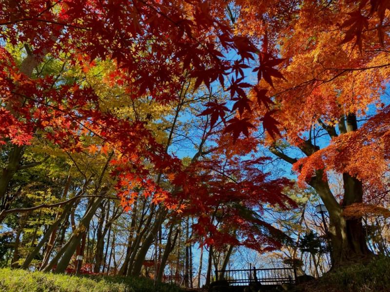 縄文時代の遺跡が保存された「塚山公園」で遊ぶ上北沢親子おでかけコース