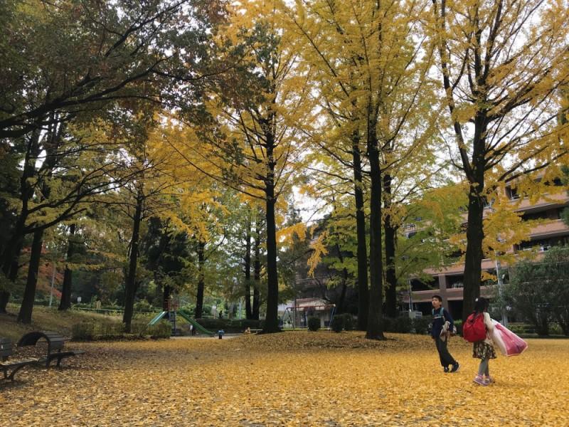 【11:30】「狭間公園」で紅葉を見ながらピクニック&遊ぶ!