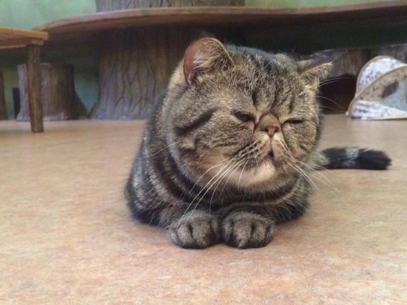 吉祥寺でフォトジェニックなスポットを巡ろう!猫とまったり過ごせる猫カフェやステーキ丼を堪能するおでかけコース