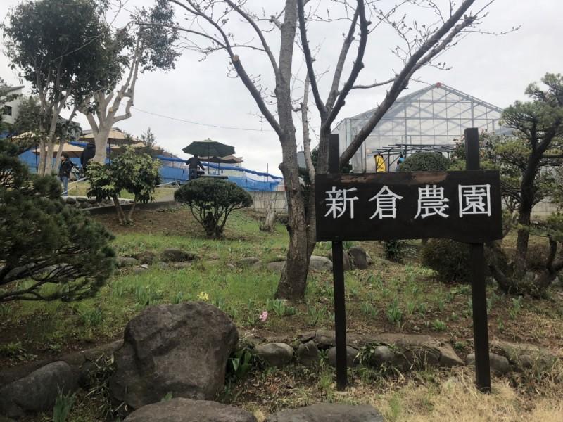 【10:30】「新倉農園」でいちご狩りを楽しむ