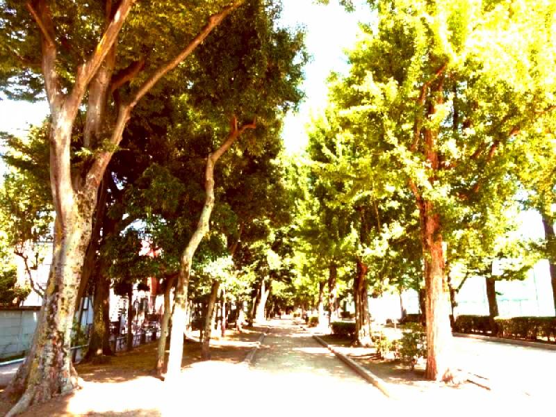 【10:40】「羽根木公園」の銀杏並木を楽しむ