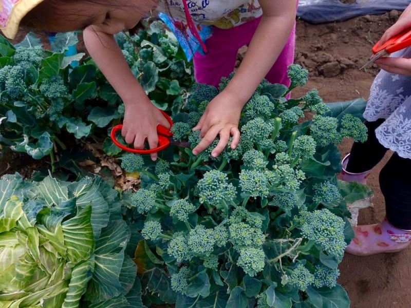 【10:00】「山内ぶどう園」で春の収穫体験