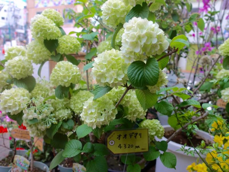 【15:30】「ユー花園 下北沢本店」で季節の花を楽しむ