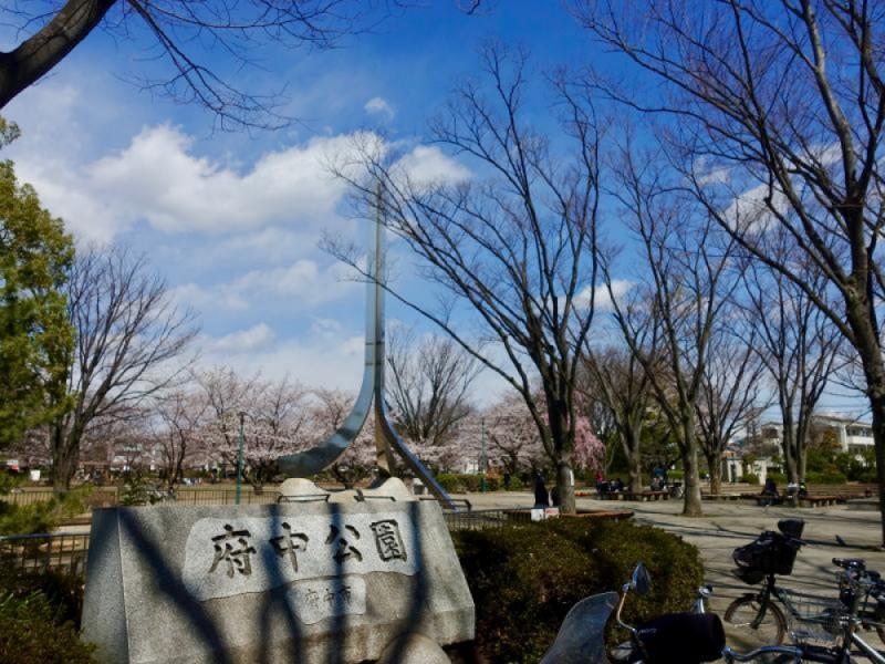 【13:00】「府中公園」でお花見
