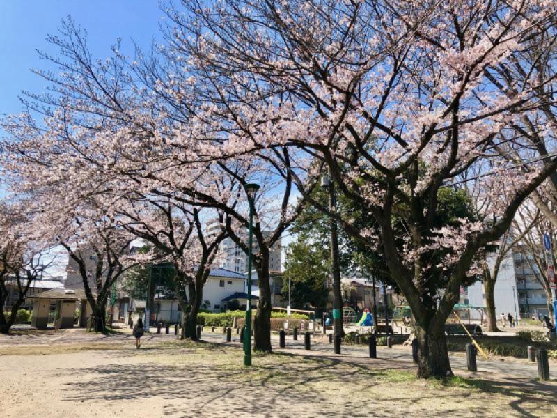 府中でお花見散歩!「寿中央公園」から「府中公園」まで桜通りで本格和食ランチも楽しむ親子おでかけコース