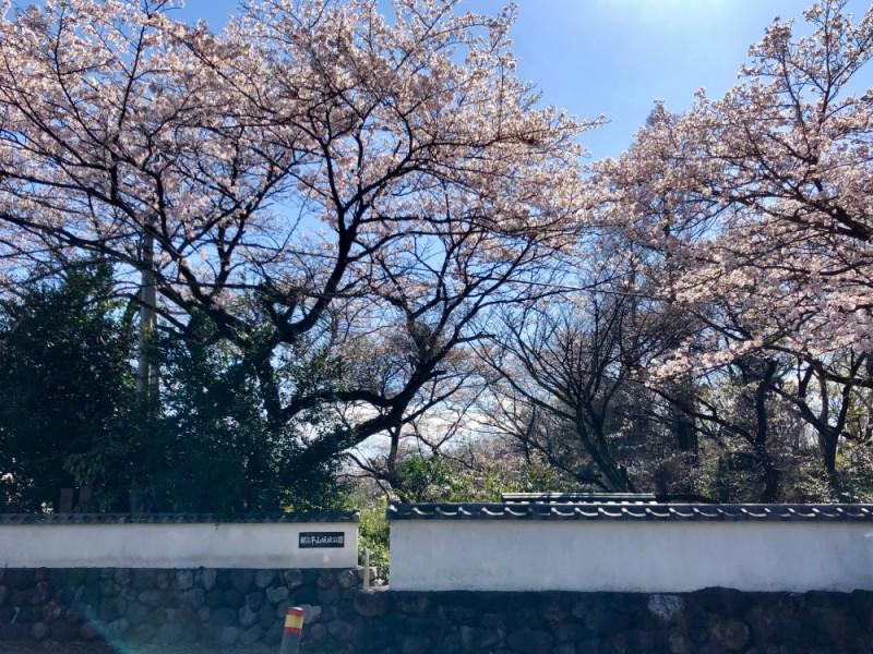 【14:30】「平山城址公園」でお花見