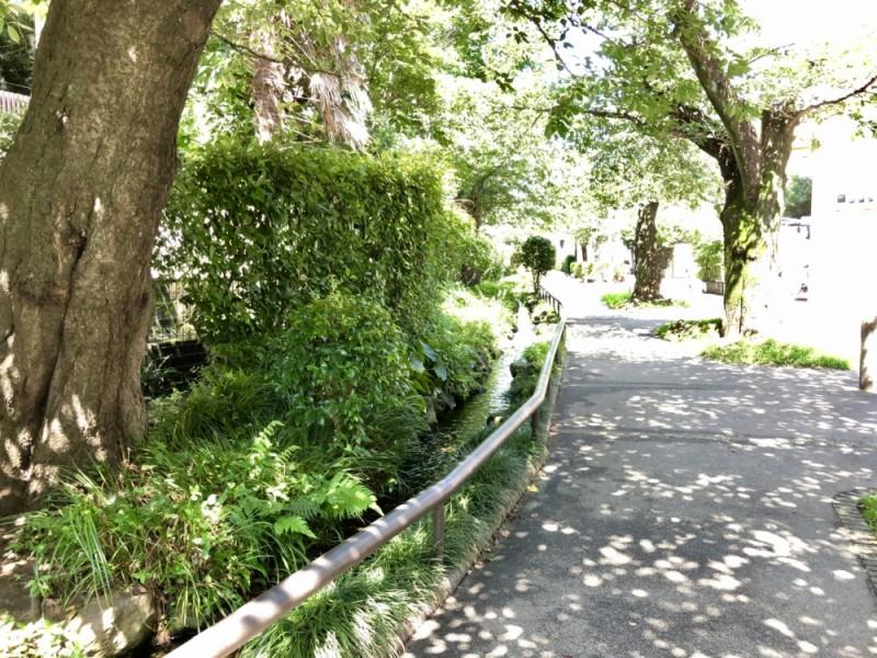 【14:50】せたがや百景に選ばれている「北沢川緑道」を散策