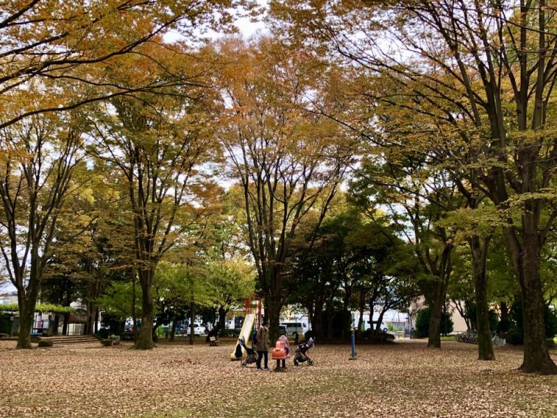 【10:10】「北野公園」で紅葉を楽しみながら外遊び