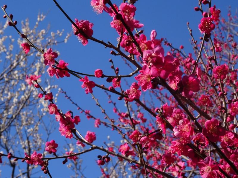 地元で人気の釜めしランチと温室でぽかぽか散歩。梅の名所「神代植物公園」で春を感じる親子おでかけコース