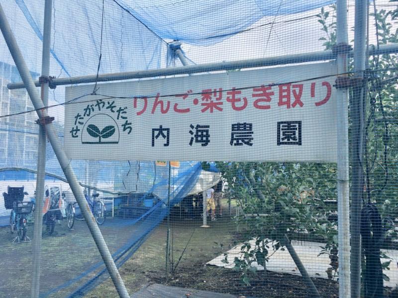 【10:30】「内海果樹園」でりんご狩りを楽しむ