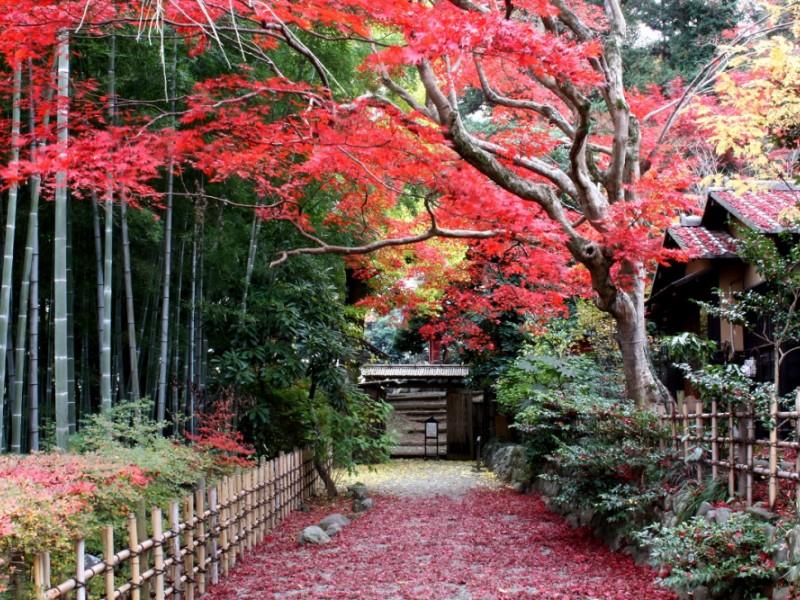 百草園の紅葉や手打ち蕎麦むら岡を楽しむ秋のお散歩コース