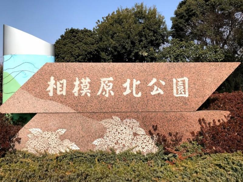 【13:30】「相模原北公園」を散策 梅園鑑賞