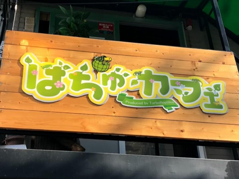 【13:50】「はちゅカフェ」でカフェタイム&爬虫類とふれあい体験