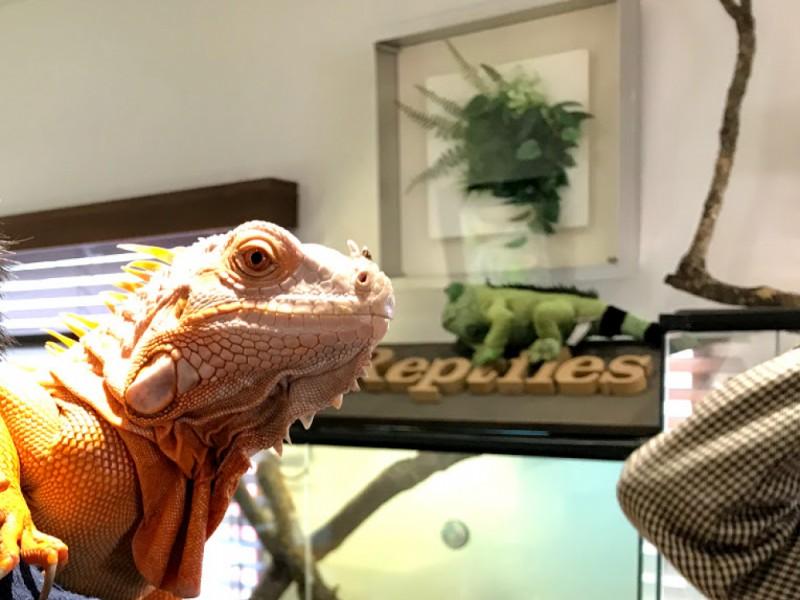 吉祥寺で新感覚体験!古道具屋併設の人気店でヘルシーランチをして爬虫類専門カフェでふれあい体験するおでかけコース