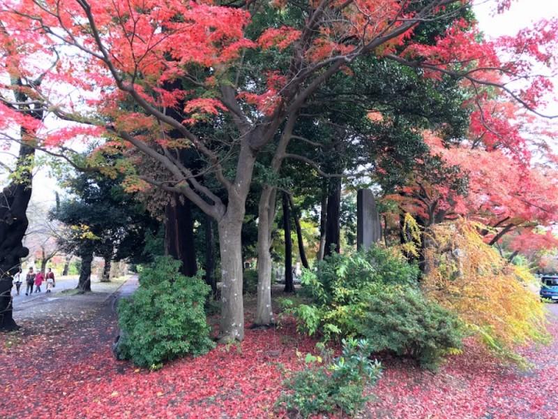 「多磨霊園駅」でボリュームたっぷりとんかつランチと日本初の公園墓地「多磨霊園」で紅葉を楽しむ親子おでかけコース
