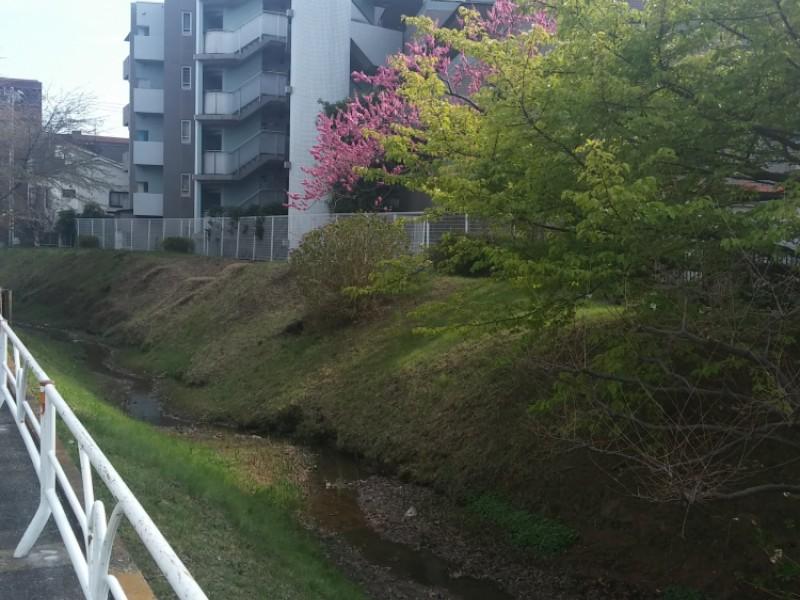 【14:00】「玉川上水第二緑道」へお散歩しながらお花見も