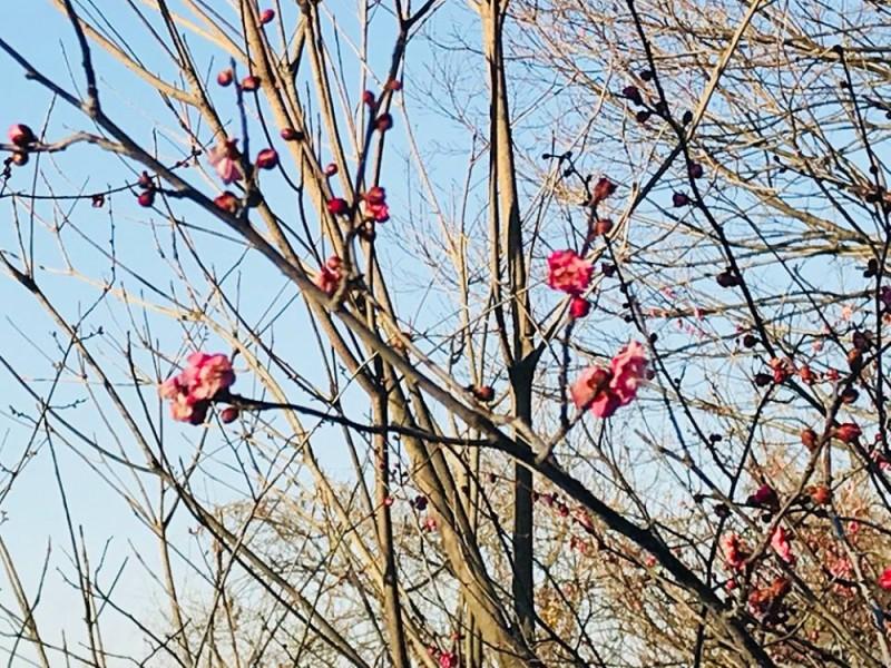 【15:30】梅を見ながら「富士見公園」「ほほえみ公園」「平水山寿徳寺」を散策