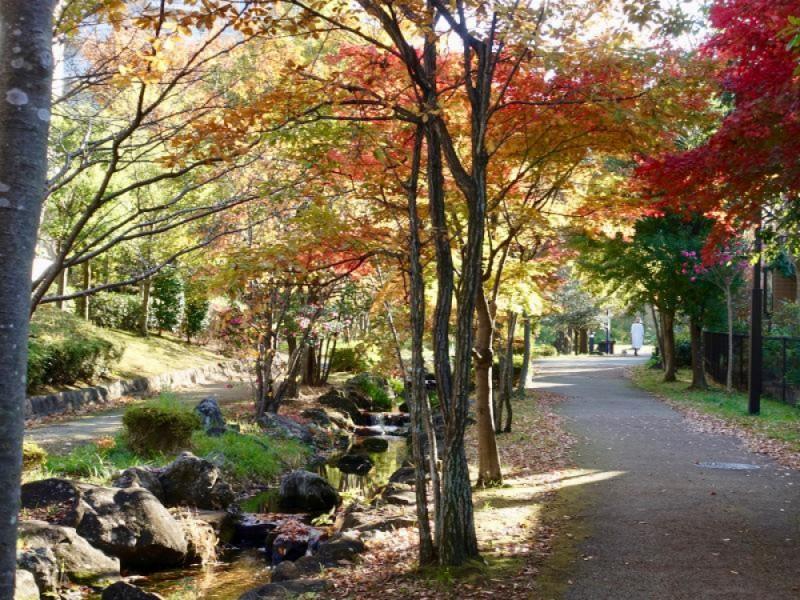 紅葉の中を散策しよう!せせらぎ緑道で秋のお散歩コース