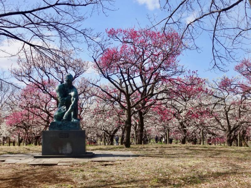 「府中郷土の森博物館」で満開の梅を楽しみ、プラネタリウムと森のカフェでのんびり過ごす分倍河原駅おでかけコース