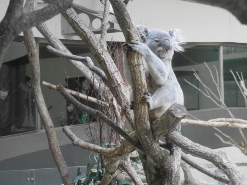 【13:30】まだ見ていないオーストラリア園でフレンズ探し