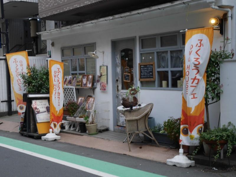 【15:00】「ふくろう舎Cafe HOOT HOOT」でふくろうと触れ合う