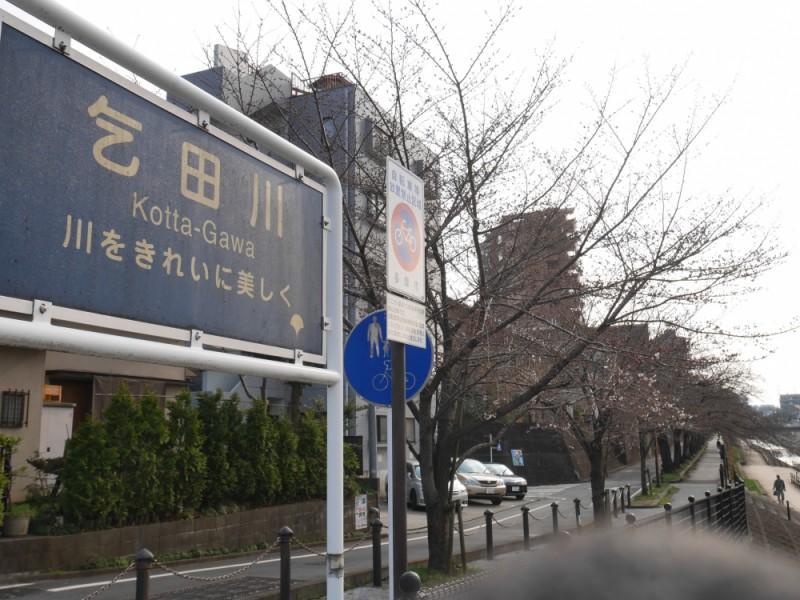 【13:00】「乞田川」沿いの桜を見ながらお散歩