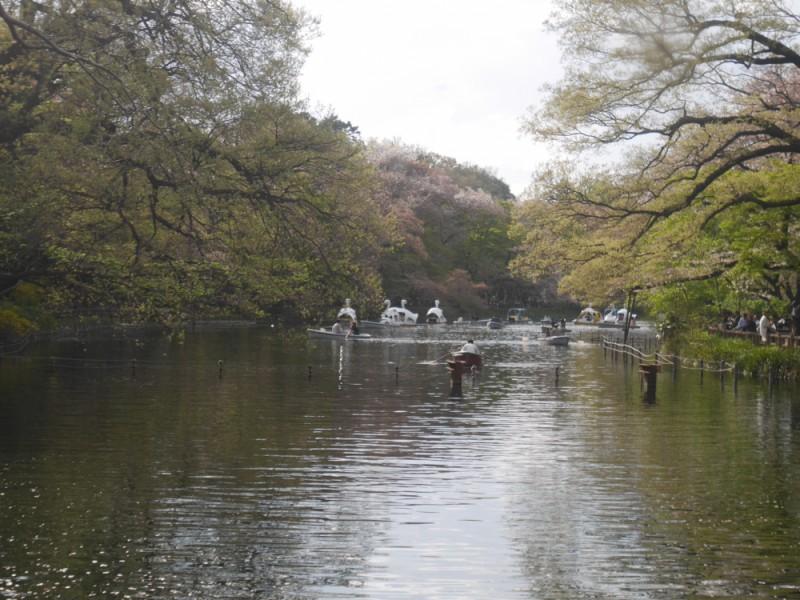 【12:30】ピクニックやテイクアウトランチにぴったり!「井の頭恩賜公園」