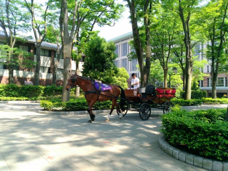 【13:00】(府中競馬場)馬とふれあい、レースを観戦する