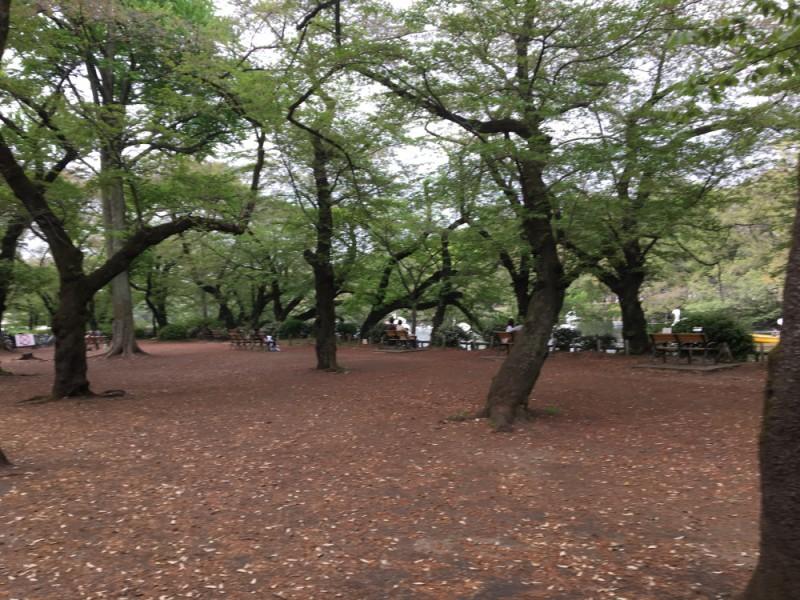 【11:30】緑溢れる「井の頭恩賜公園」を散策
