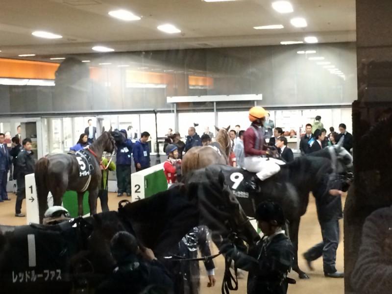【14:00】「ホースプレビュー」でレース後の馬を間近で鑑賞