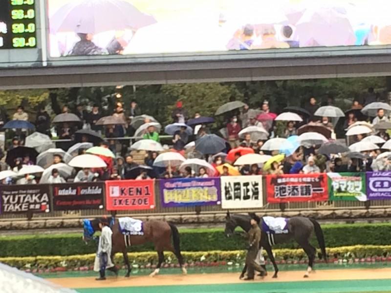 【14:40】「パドック」でレース前の馬をチェックし、いざ馬券購入!