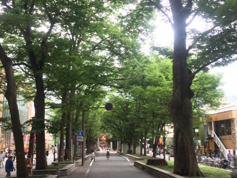 【15:40】「馬場大門のケヤキ並木」を通って「大國魂神社」へ