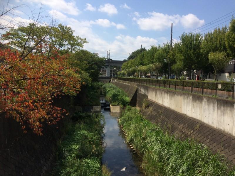 【11:10】稲城・三沢川沿いの桜並木の紅葉を鑑賞