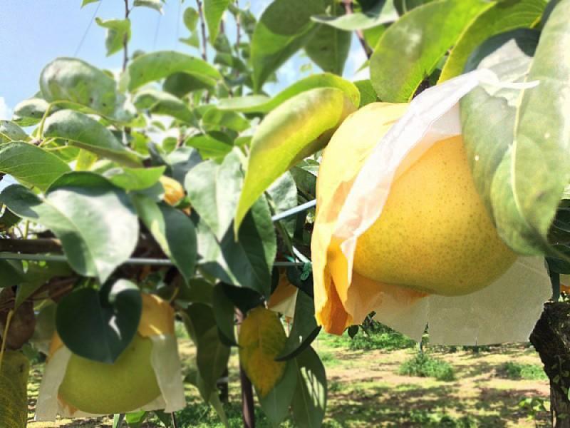 稲城で紅葉と梨狩り体験を楽しもう!贅沢に秋グルメを堪能するコース