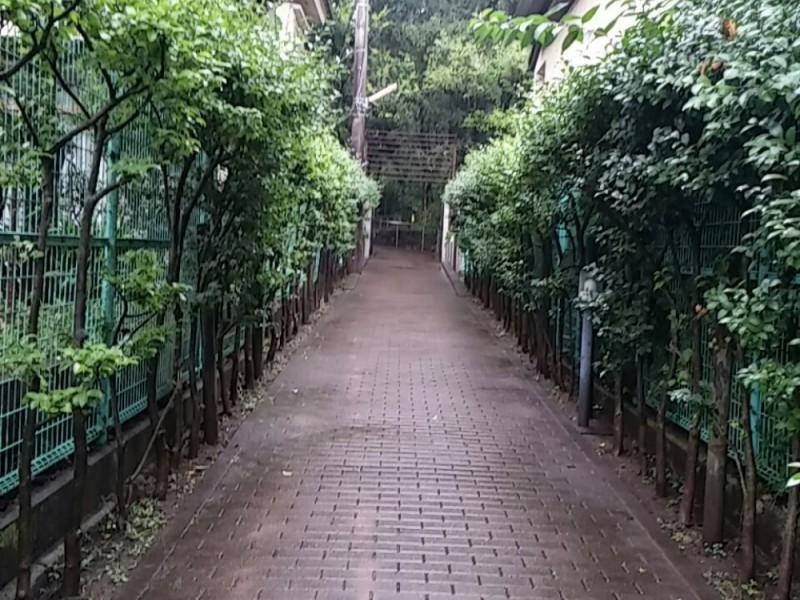 【13:30】緑に囲まれた「駒場公園」でリフレッシュタイム