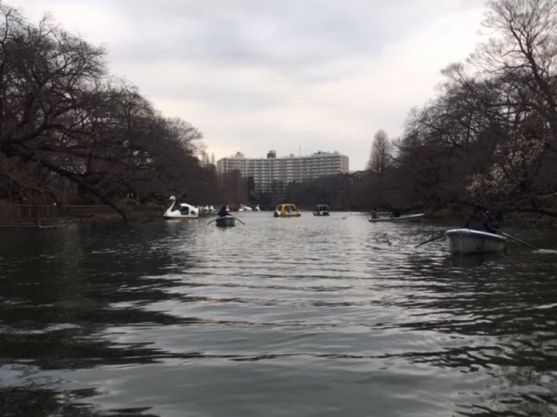 【13:30】「井の頭公園」でボート体験!