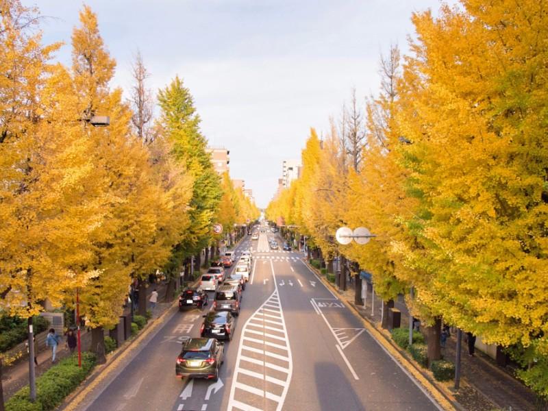 【13:00】「甲州街道 いちょう並木」を散策