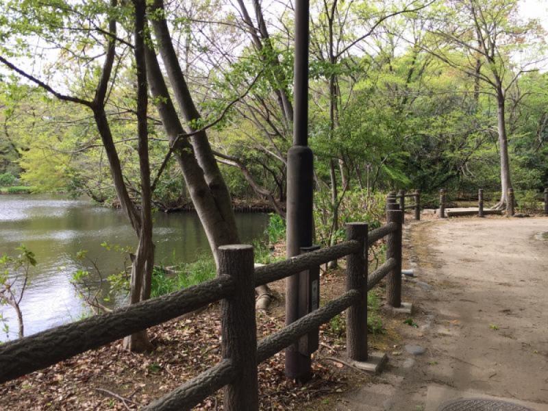 【14:00】「和田堀公園」を散歩