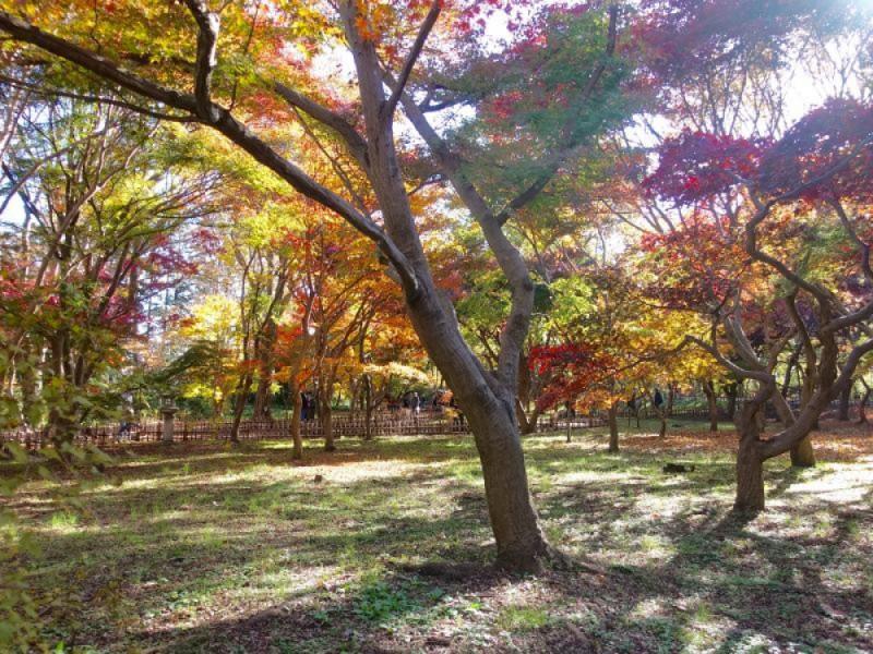 【11:00】「神代植物公園」で紅葉を楽しむ