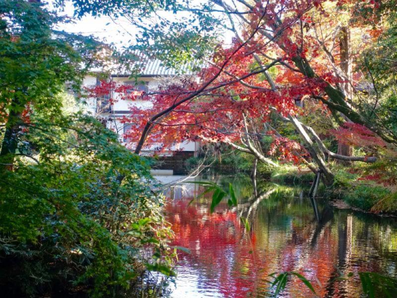 晩秋を満喫!神代植物公園の紅葉と深大寺そばを満喫するコース