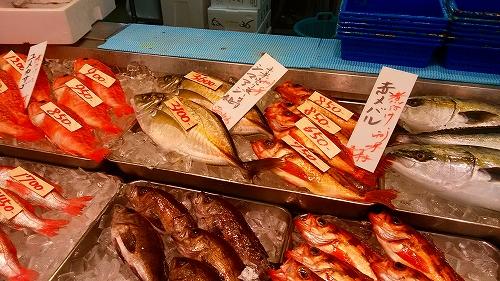 日野 魚類 角 上